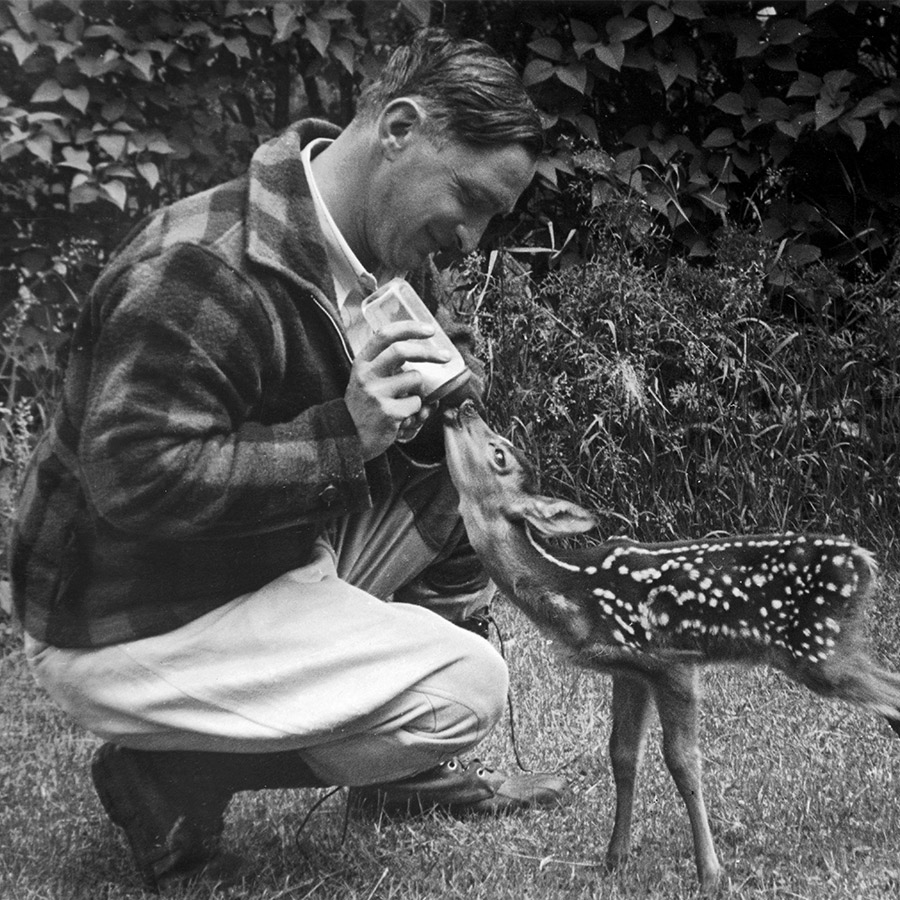 Man in flannel bottle feeding a baby deer