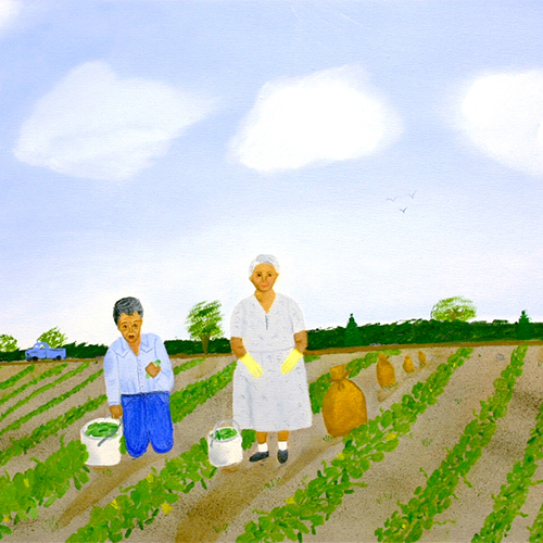 Trabajando en el Campo (Working in the Fields) is a folk painting made from memory by an untrained artist. Beginning in the late 1940s, the Contreras family of south Texas traveled to Wisconsin to work in the farms and processing facilities of the Marks Brothers Pickle Company near Wautoma.            The artist, Seferina Contreras Klinger, traveled with the family during each summers as a child in the 1960s, but decided to stay in Texas when she reached her teens.            The painting shows the Contreras family working in the cucumber fields in 1965. It highlights the artist's grandmother, Aurelia Contreras, and her uncle, Fidel Contreras, picking and loading cucumbers in the fields. Klinger painted the scene from childhood memories and used family photographs for facial details.