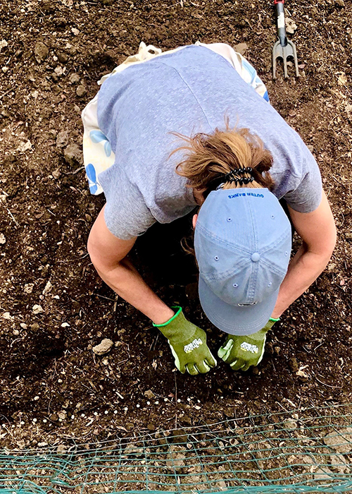 A woman gardening face obscured by a ball cap as the picture is taken from above.